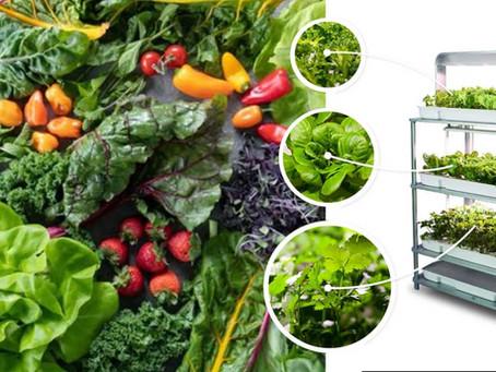 Discover The Benefits Of An Indoor Garden