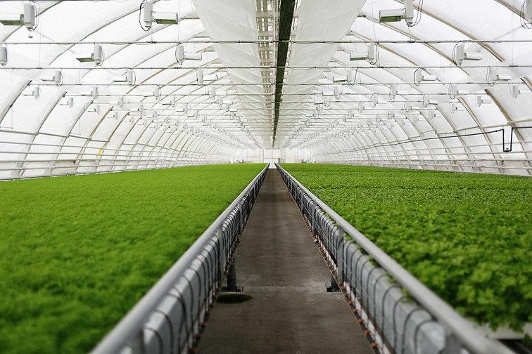 automated-greenhouse.jpg