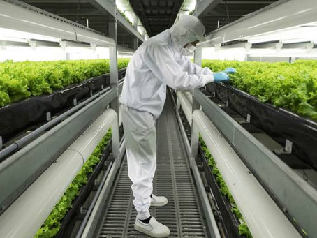 Vertical Farming: Hope or Hype?
