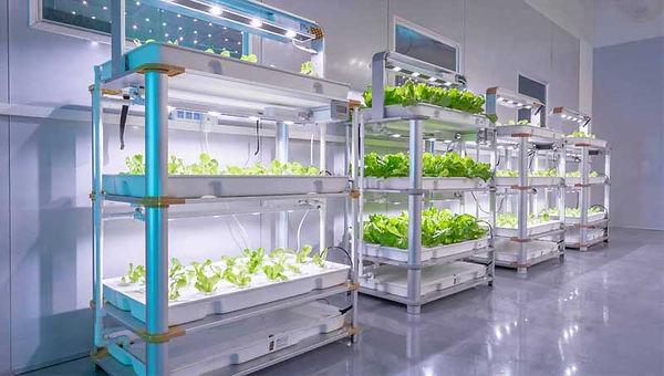 little-farm-hydroponic-system.jpg
