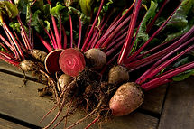 Beetroot freshly picked from the allotment