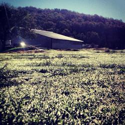 Grass Farming?