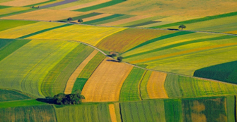 Agriculture-sector- services in delhi India