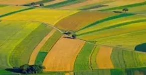 agriculture-soil-carbon, stock, estimation, in, delhi