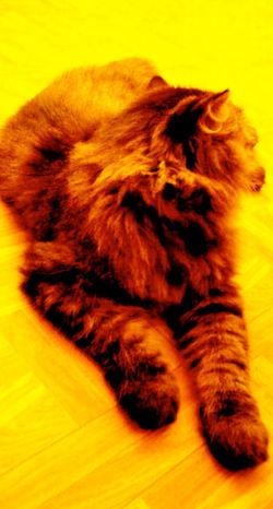 mimi the neighborhood kitty 1