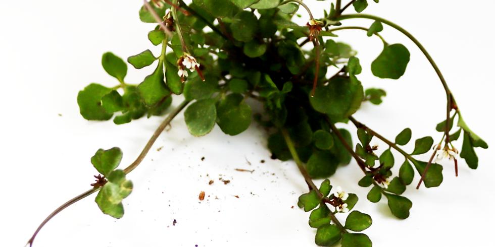 edible weeds - workshop