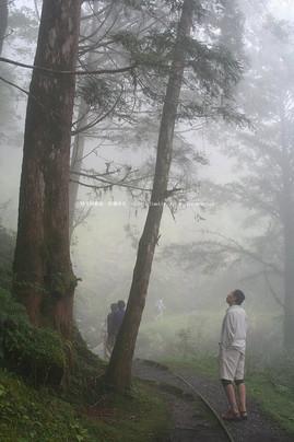 台灣森林Taiwan Forest