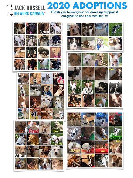 2020 adoptions.jpg