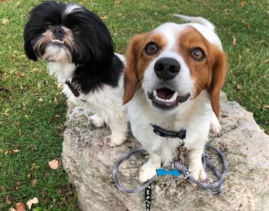 Patio and Roscoe