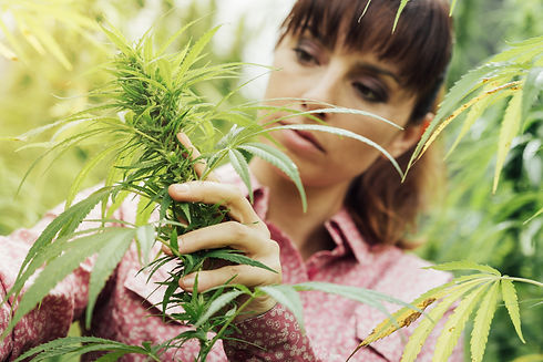 stockfresh_6470285_woman-holding-hemp-flowers_sizeXXL_edited.jpg