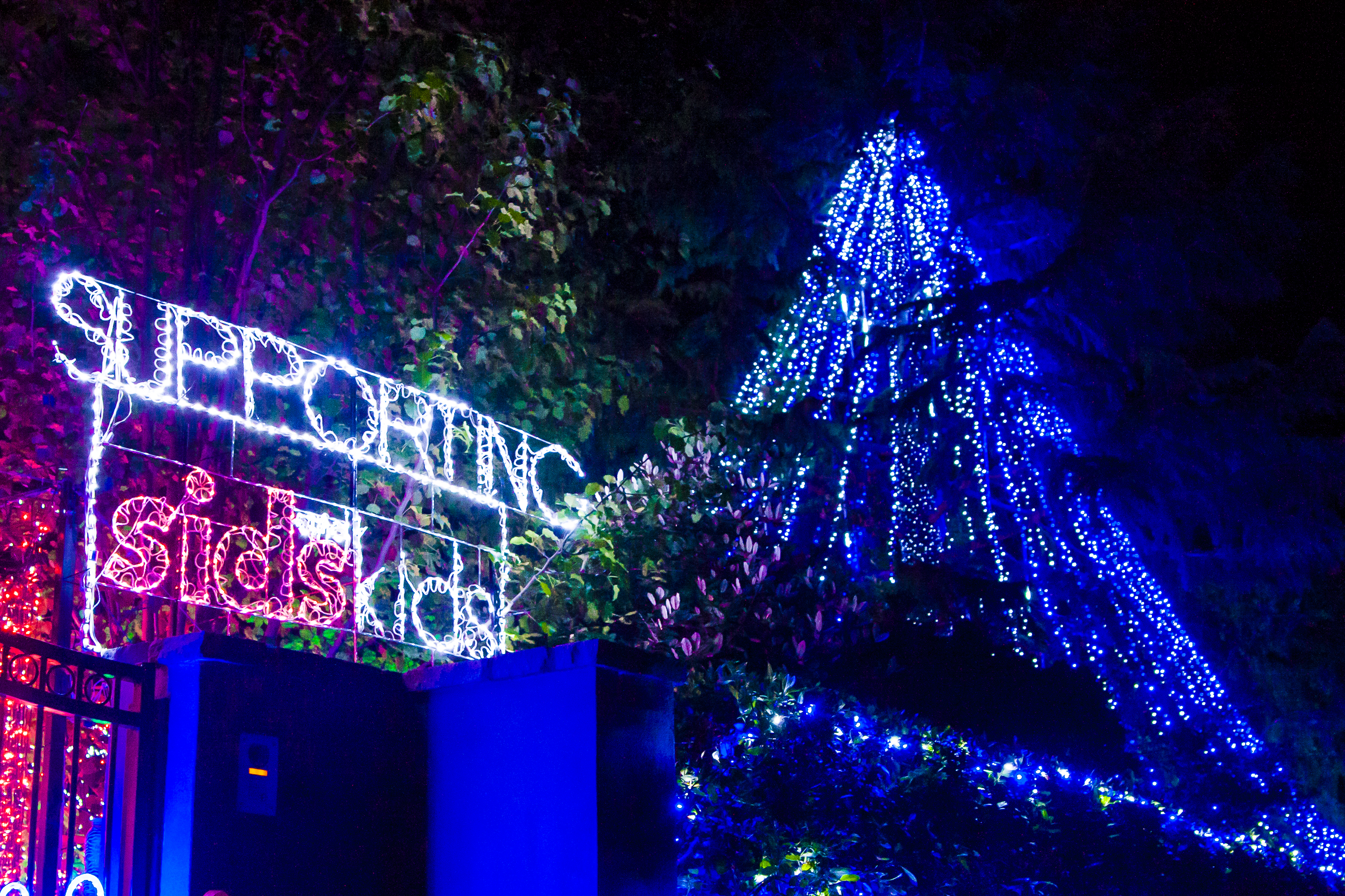Forrest Christmas Lights - 2013