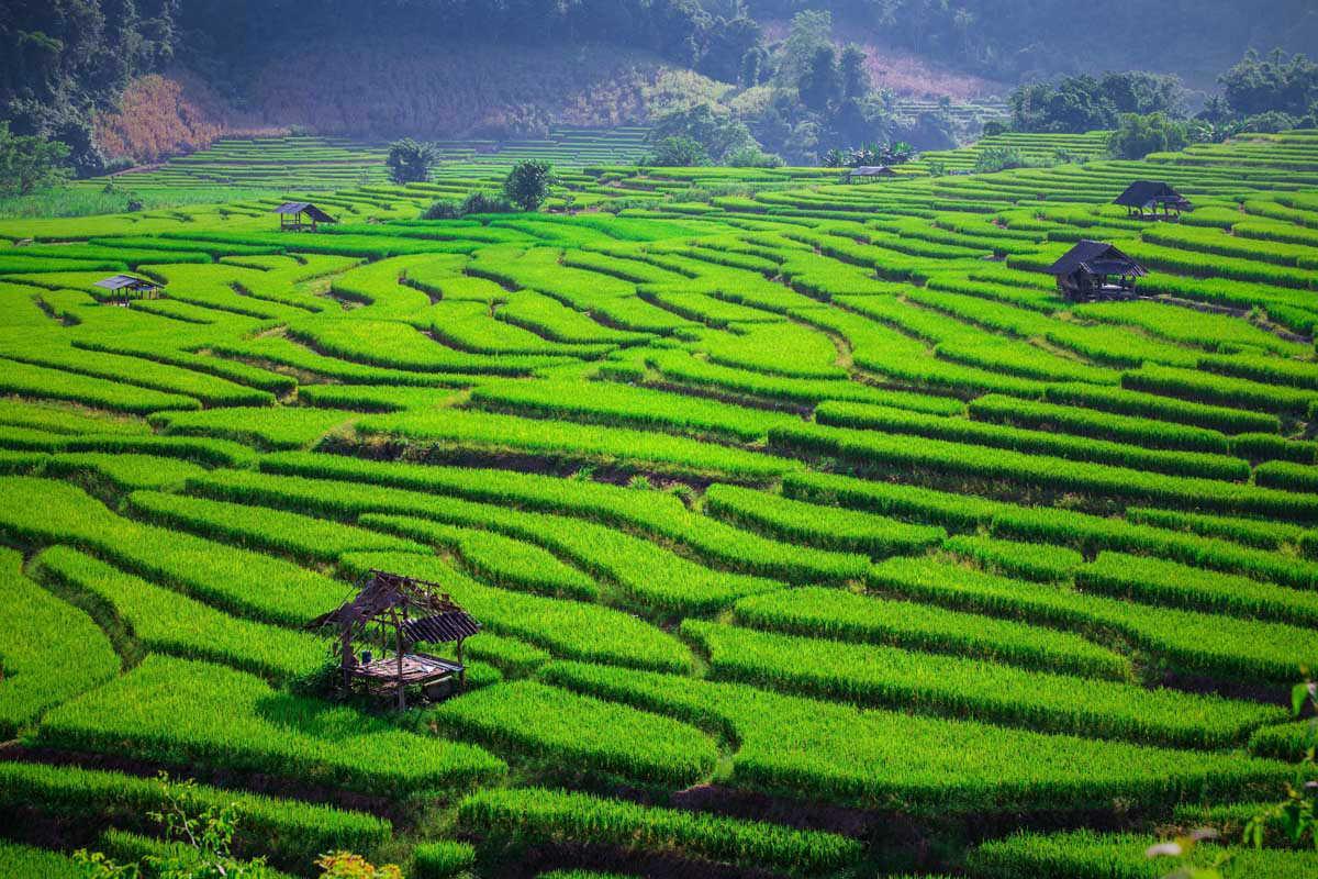 riziere-terrasse-chiang-mai