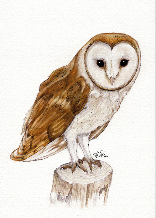 barn owl print original art work