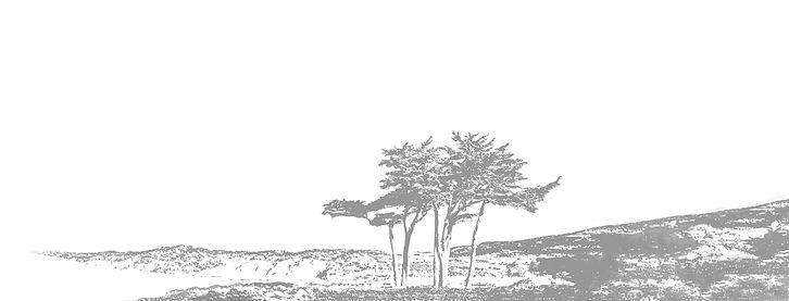 panorama tree2.jpg
