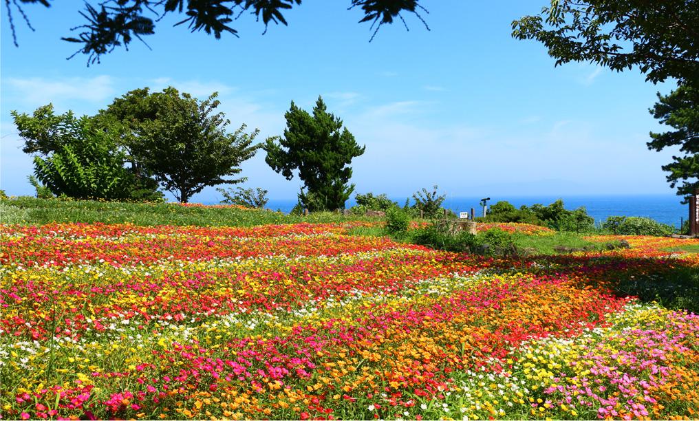 garden_img_11