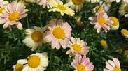 春はお花いっぱい・・心和みます