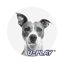 pitty uplay.png