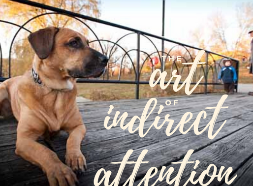 Your dog only behaves when you're around? Practice the Art of Indirect Attention