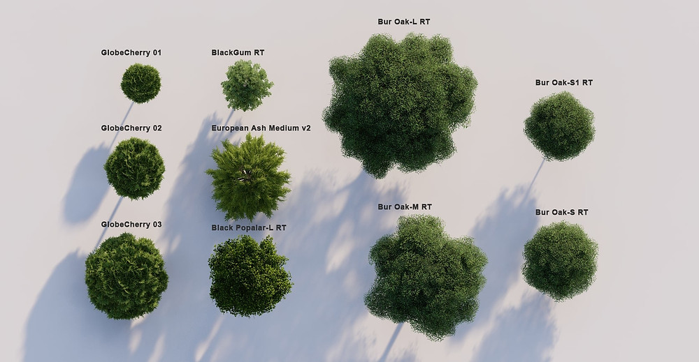 Image of trees rendered in Lumiom by The Lumion Collective