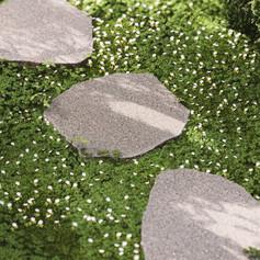 In the Garden - Detail