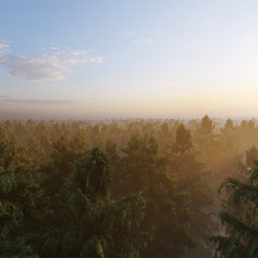 Pine View - Environment