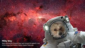 NASA Selfies.png
