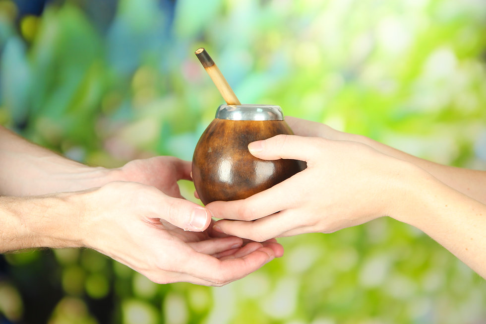 two hands holding yerba mate in new zealand