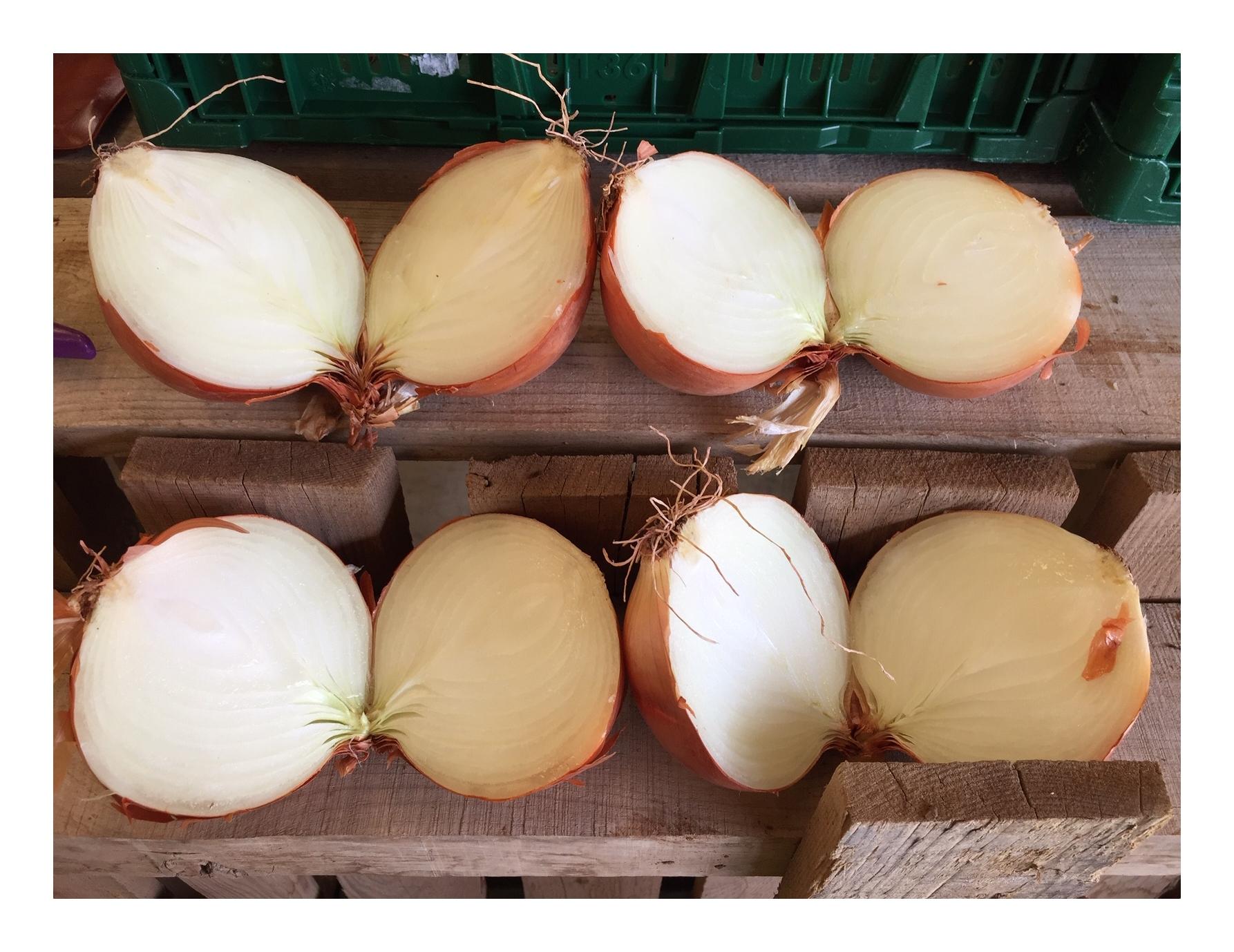 Cebolla Grano
