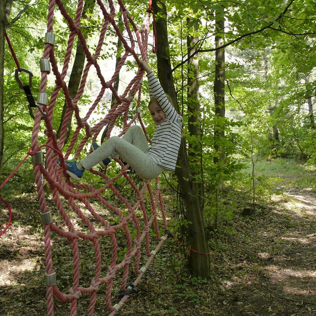 das Netz im Wald