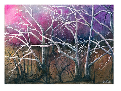 Pink Sycamores