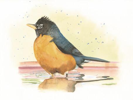 Who loves Robins? A blog by Jamie Briggeman
