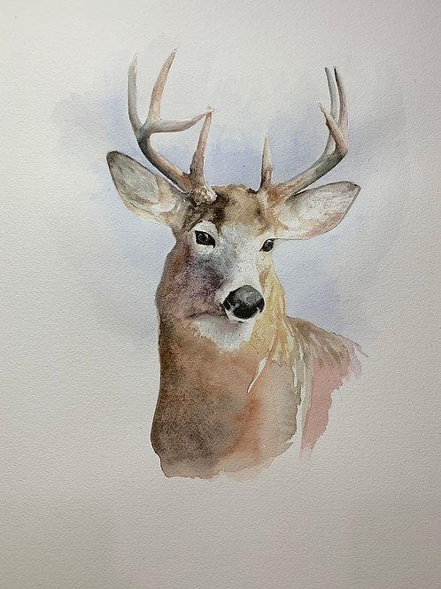 Big Buck Print