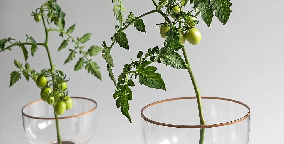 Ikebana Glass Vase+Kenzan 35 mm
