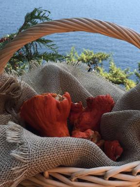 Lobster mushrooms at Mabel.jpg