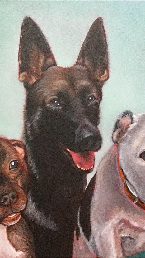 Three Dogs - Oils - COMMISSIONED WORK