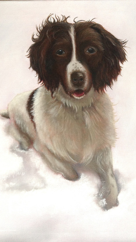 Spaniel - Oils - COMMISSIONED WORK