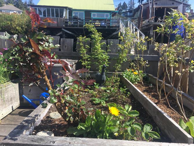 Organic Backyard Gardening