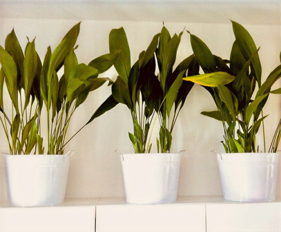 The 3 Plants