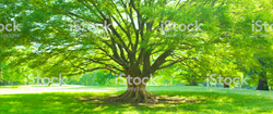 arbre revelatrice de potentiels