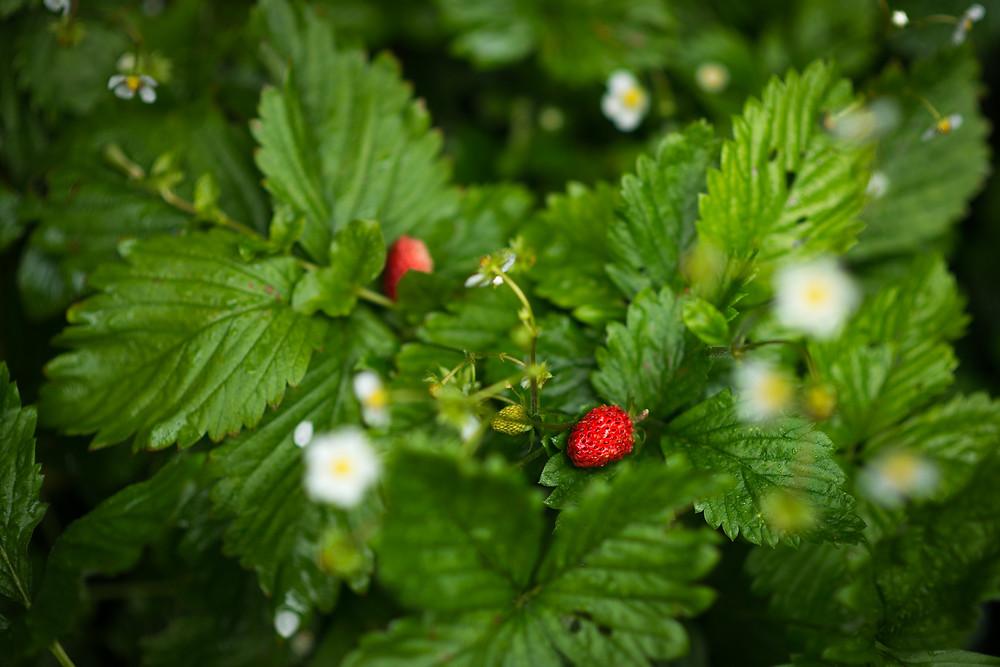 aberdeen-family-children-photographer-wild-strawberry