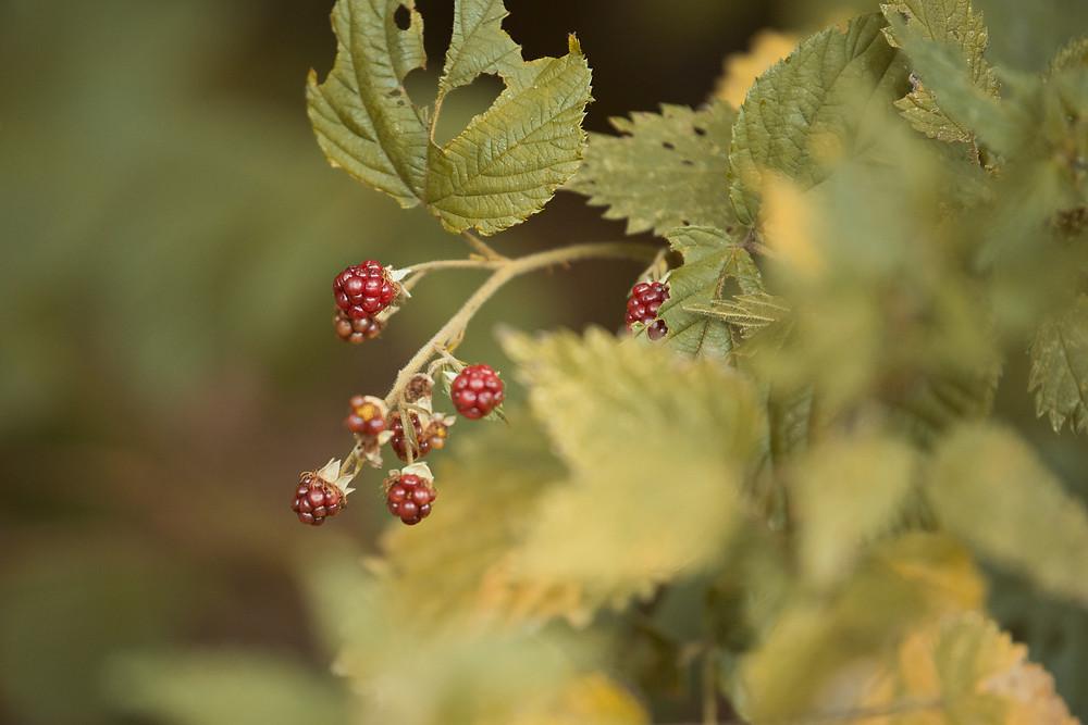 Best-aberdeen-family-children-photographer-montrose-arbroath-autumn-berries-foraging-scotland-dunnottar-woods-stonehaven