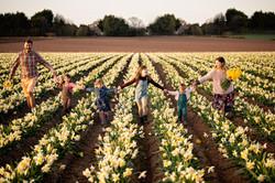 family-walking-across-daffodil-field-scotland-photographer