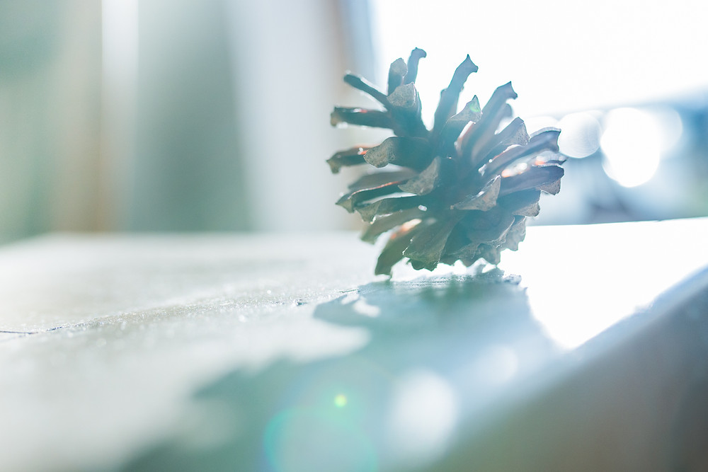 Best-aberdeen-family-children-photographer-montrose-arbroath-pinecone-in-winter-light-with-lens-flares