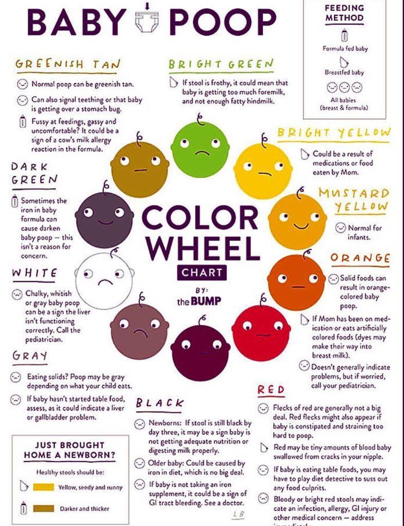 Baby Poop Colour Wheel