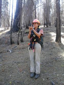 Fernanda Forest Northern CA