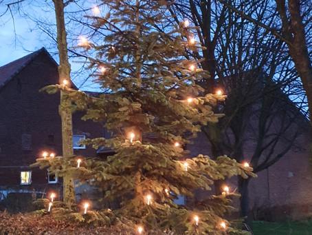 Weihnachtsbäume in Daseburg .... was man alles an den Baum hängen kann!