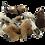 Thumbnail: PES Hawaiian Magic Mushrooms