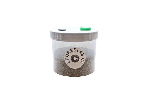 Rye Grain Spawn Jar