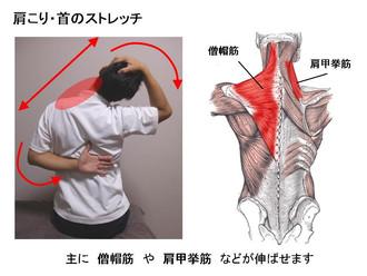肩の痛み・肩コリの原因になる筋肉①