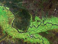 Ob river (summer) from Landsat satellite